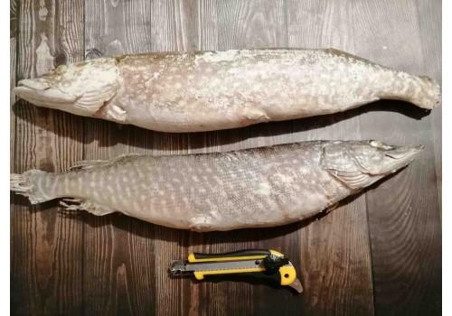 ЩУКА С/М (1-2 кг.)